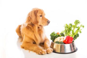 犬にミドリムシを与える場合は食中に餌に混ぜる形でミドリムシを与えます。