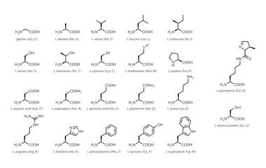 ミドリムシにはアミノ酸が18種類も!不可欠な理由と働きとは