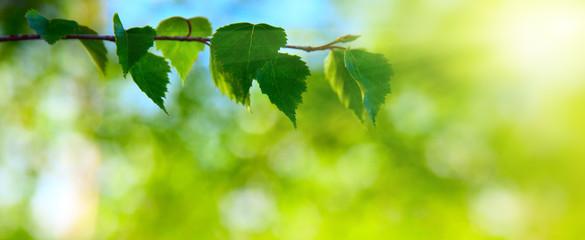 ミドリムシにも含まれるクロロフィルとは、光合成で有名な葉緑体に含まれる「緑色色素」です。