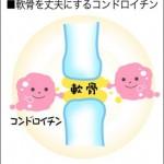 コンドロイチンは軟骨を丈夫にする