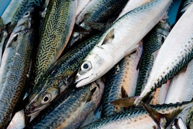 血液をサラサラにするEPAやDHAを多く含む青魚の写真