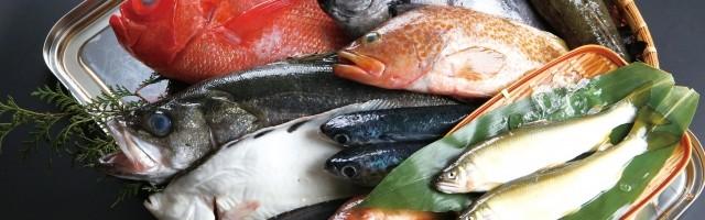 必須脂肪酸であるDHA(ドコサヘキサエン酸)を多く含む魚類写真