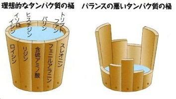 アミノ酸がひとつでも欠けるとタンパク質ができない様を示した桶の図