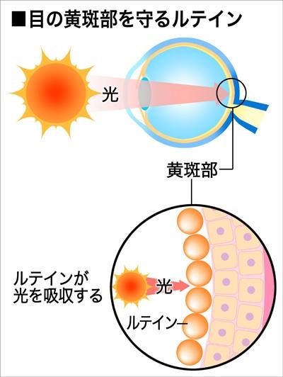 紫外線や青色の光(ブルーライト)から目や皮膚を守るルテイン