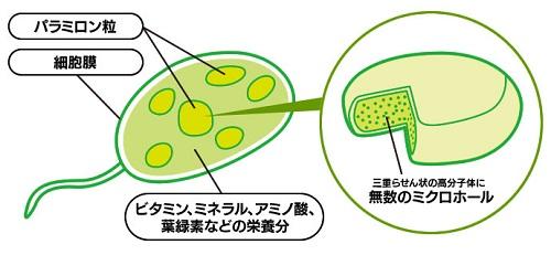 表面にミクロホールと呼ばれる小さな無数の穴を持つパラミロン
