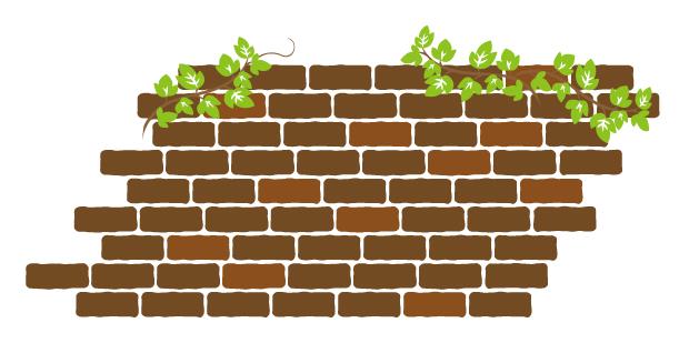 細胞壁がある野菜と細胞壁がないミドリムシの吸収率の違い