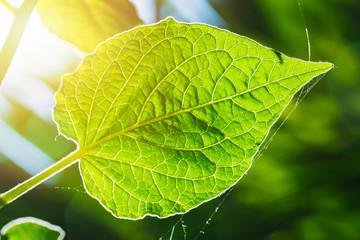 ミドリムシは「光合成」することで酸素を生成できる動物。