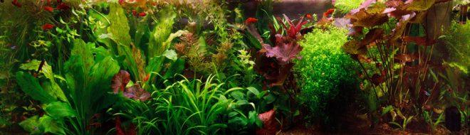 話題の「藻活」とは!?ミドリムシが新しく美容・健康業界の常識に。